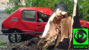 Drzewo zmiażdżyło auta