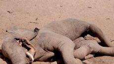 Pod martwym słoniem znaleziono krokodyla (Andrew Mwanza)
