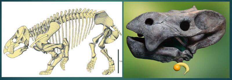 Rekonstrukcja szkieletu (prezentacja dr hab. Tomasza Suleja)
