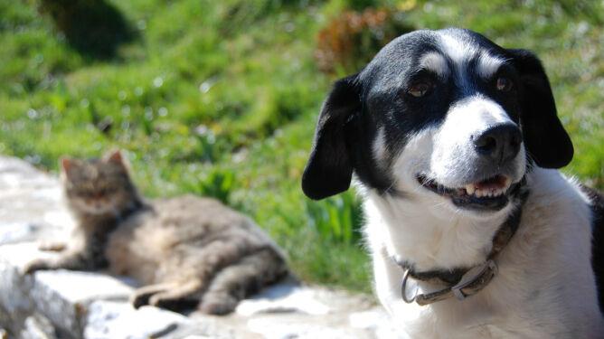 Pięć niebezpieczeństw, na które latem narażone są nasze zwierzęta