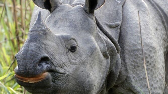 Powstały nowe siły specjalne. Do obrony nosorożców